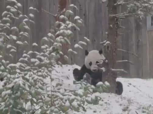 Bei Bei Playing In The Snow Forever