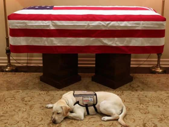 George H. W. Bush's Service Dog Laying In Front Of His Casket Is Incredibly Moving