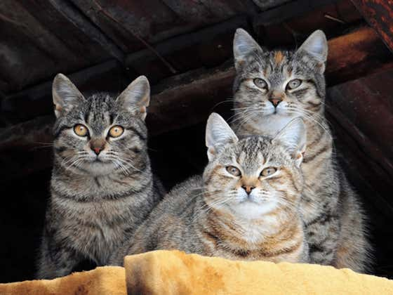 We Should Be More Worried About A Bunch Of Cats In Wyoming Testing Positive For The Bubonic Plague