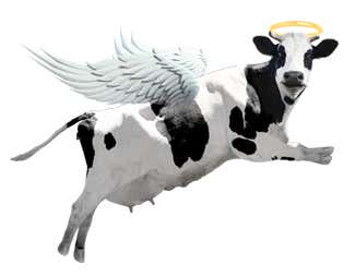 left-flying-cow