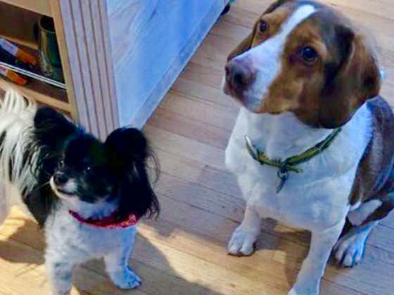 Pair Of Minnesota Dogs Call 911 Dozens Of Times In A Row, Dontcha Know