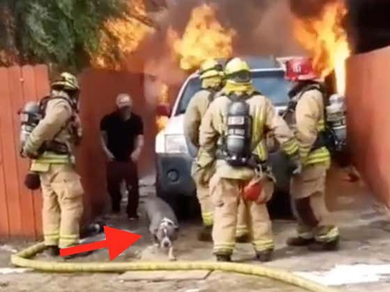 Crazy Video Shows Man Running Into Blaze To Save His Best Friend And I Felt Lots Of Feelings
