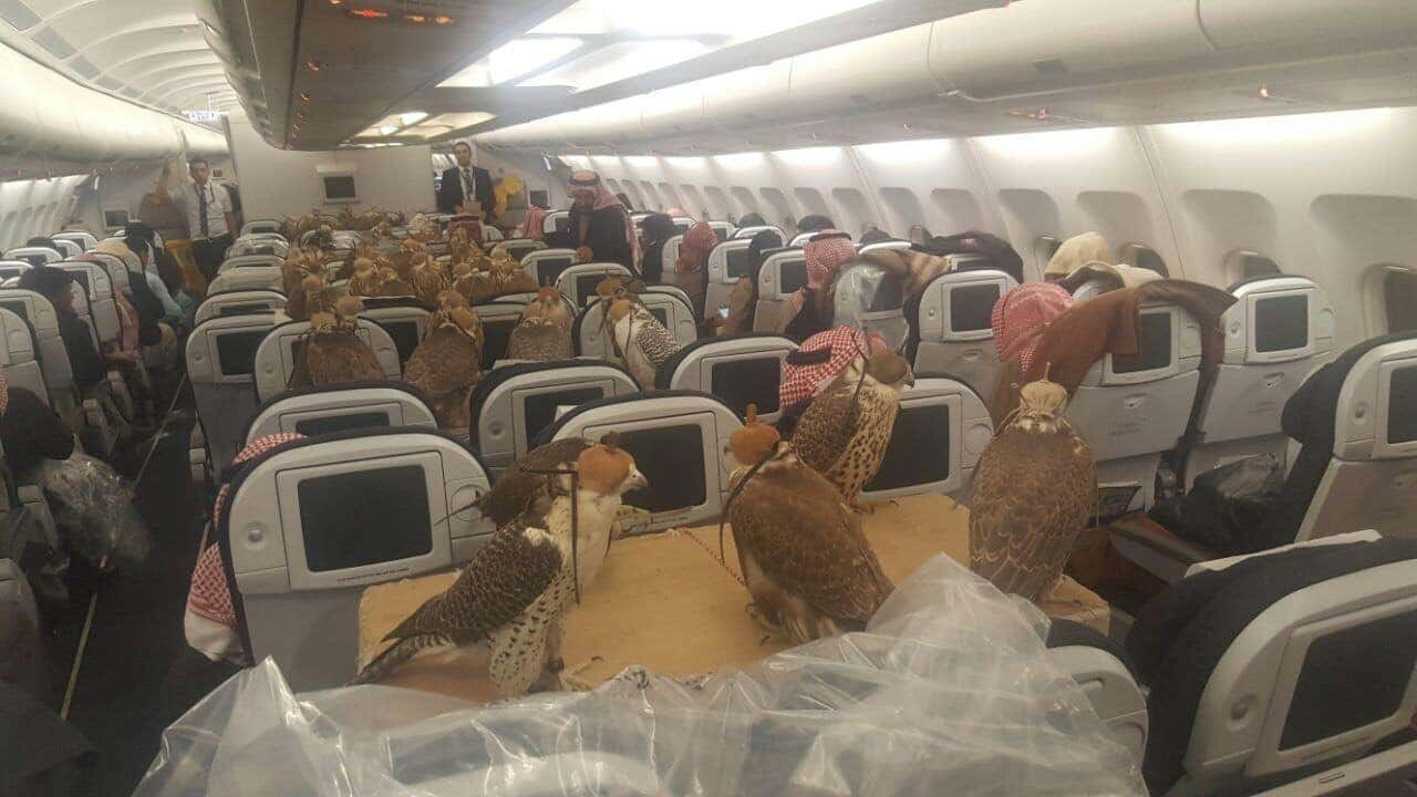 I Flew On A Plane With Emotional Support Falcons