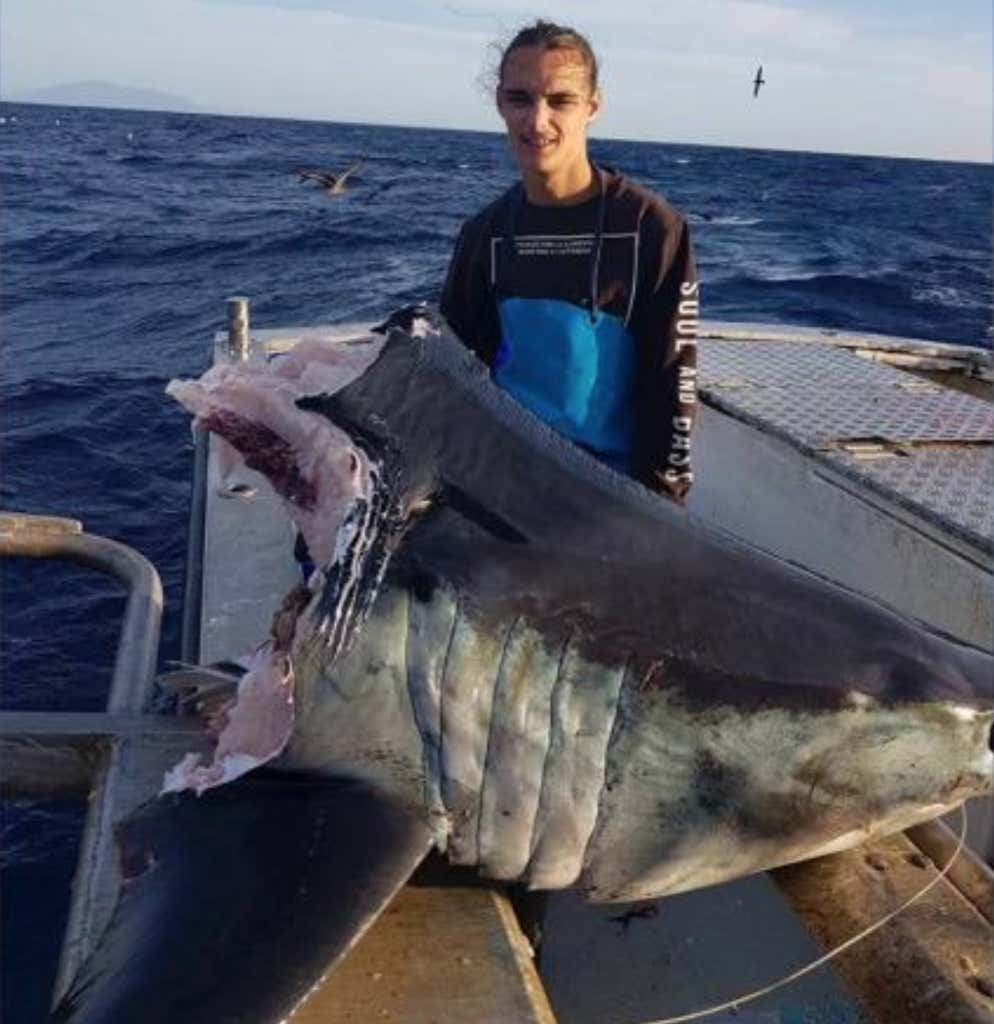 How Big Was The Shark That Ate Half Of This Giant Mako