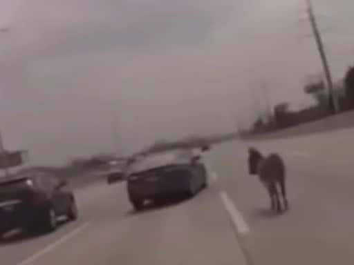 Cook County Sheriff Gets Flustered Trying To Remove A Donkey From The Highway