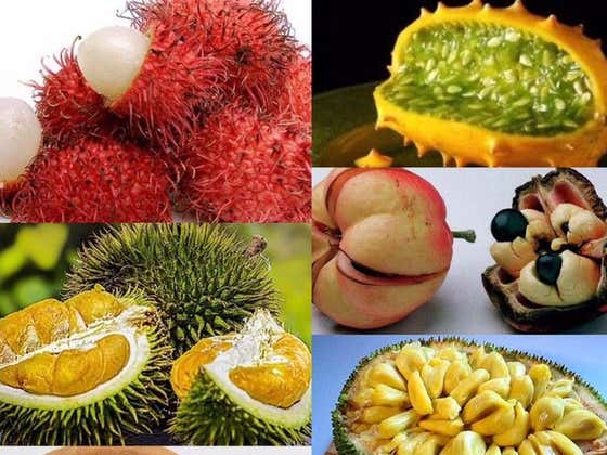 The Zodiac Signs As Visually Disturbing Fruits