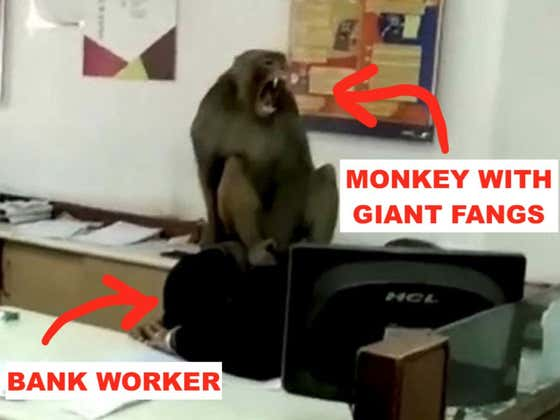 Rabid, Fanged Monkey Humps Bank Employee's Head As Delighted Coworkers Look On Laughing