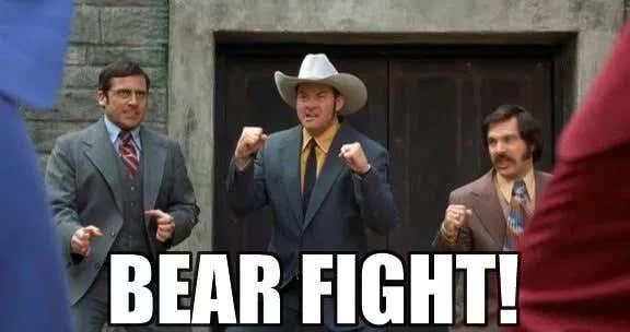 Bear fight anchorman