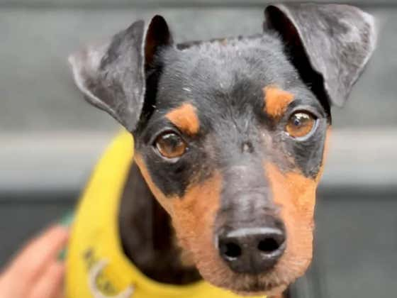 BLOGS FOR DOGS: Meet Wilson