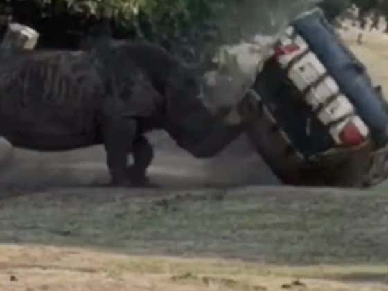 Zookeeper Somehow Survives The Most Vicious Rhino Attack (on his car) I've Ever Seen