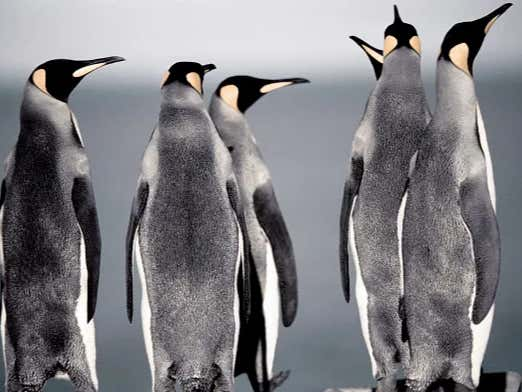 We Need To Cancel Penguins. The Most Vile, Sexually Deviant Animal On The Planet, Worse Than Humans
