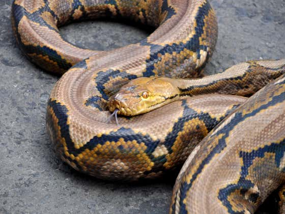 Hard Factor 1/17: FLORIDA MAN FRIDAY!: The 'Python Bowl,' Leprosy And Armadillos, Squirrel Roommates, Drunk MMA Fighter