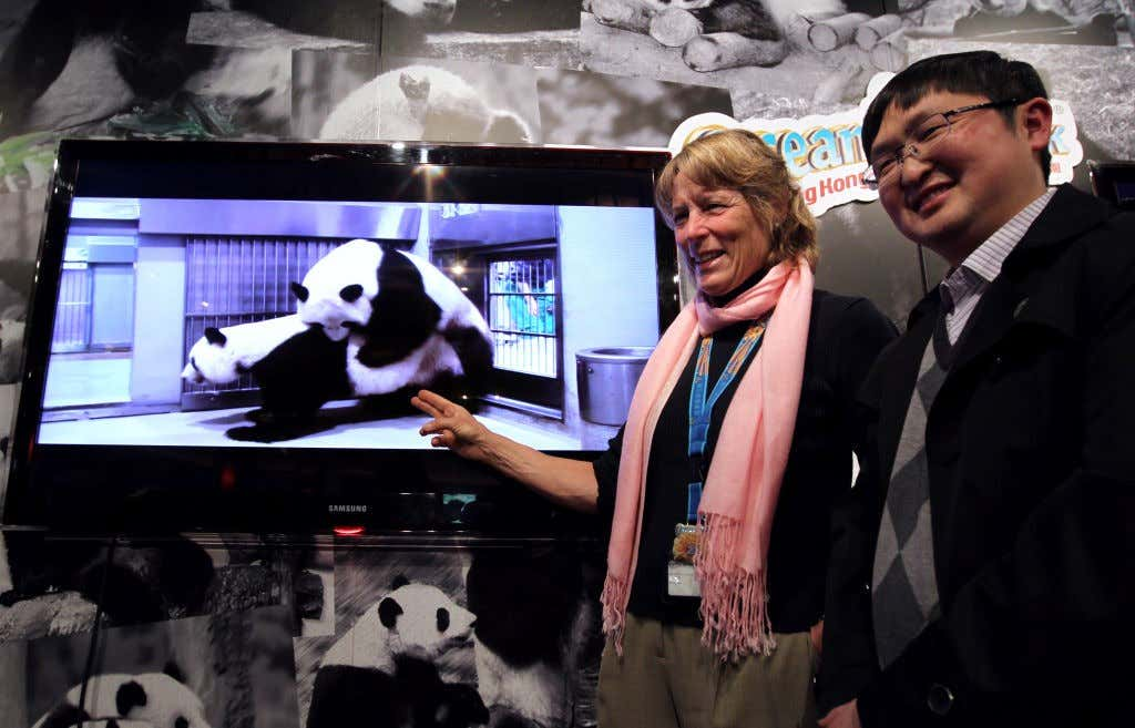 Suzanne Gendron (L) , Executive director of Zoological Operations and Education of Ocean Park and Wang Chengdong (R) , Director of Veterinary Service of the China Conservation and Research Cenre for the Giant Panda in Wolong show a video about mating proc